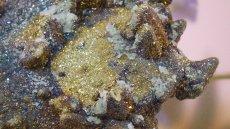 画像3: レインボーキャルコパイライト(黄銅鉱) (3)